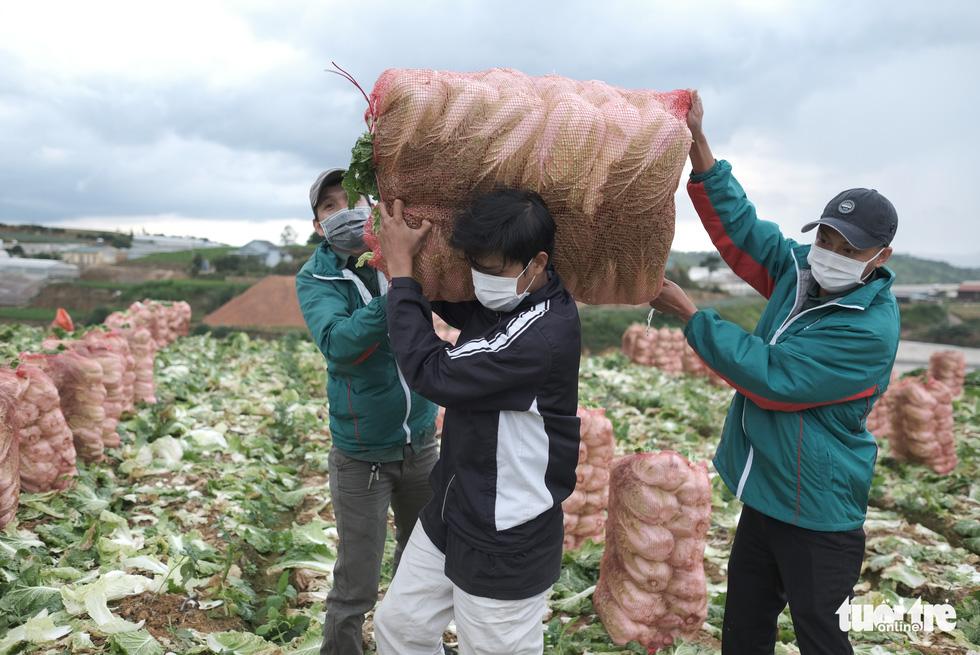 Hình ảnh đoàn xe VIP của Lâm Đồng hoàn thành chở 6.000 tấn nông sản tặng miền Nam - Ảnh 3.