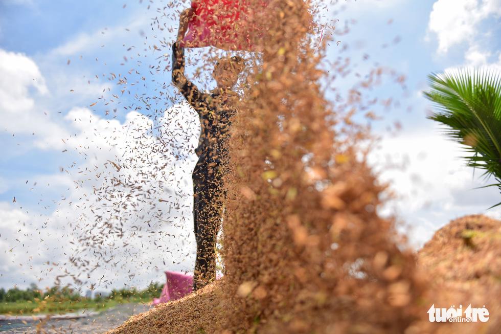 Gặt lúa, bắt cá mưu sinh giữa TP.HCM trong mùa dịch - Ảnh 8.