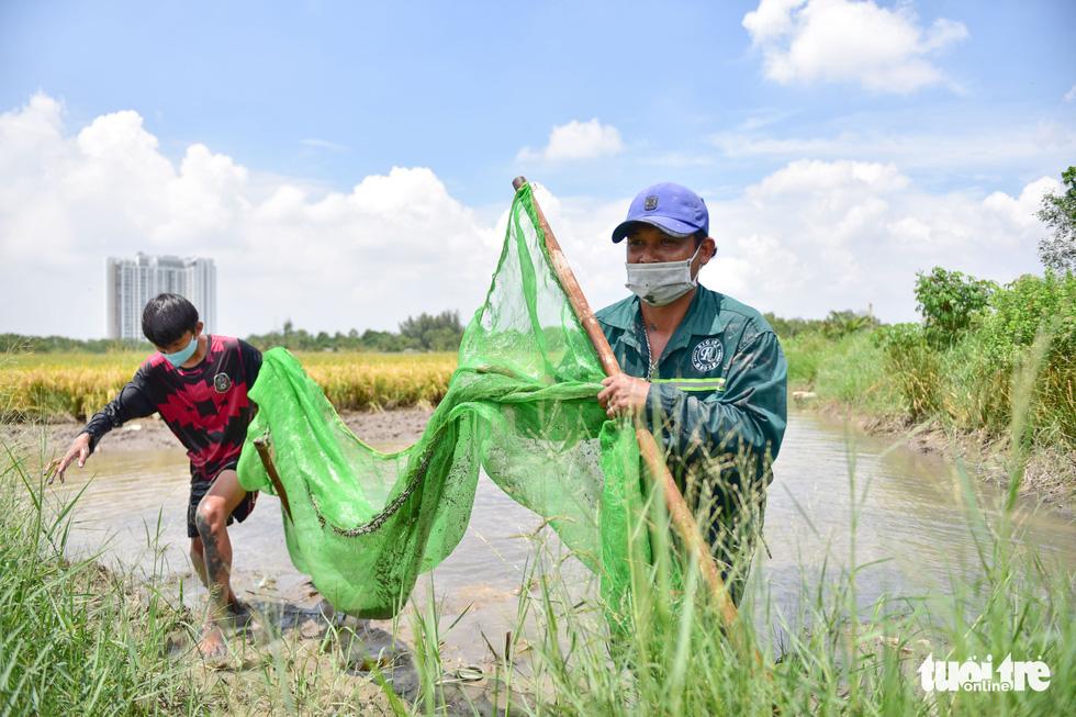 Gặt lúa, bắt cá mưu sinh giữa TP.HCM trong mùa dịch - Ảnh 11.
