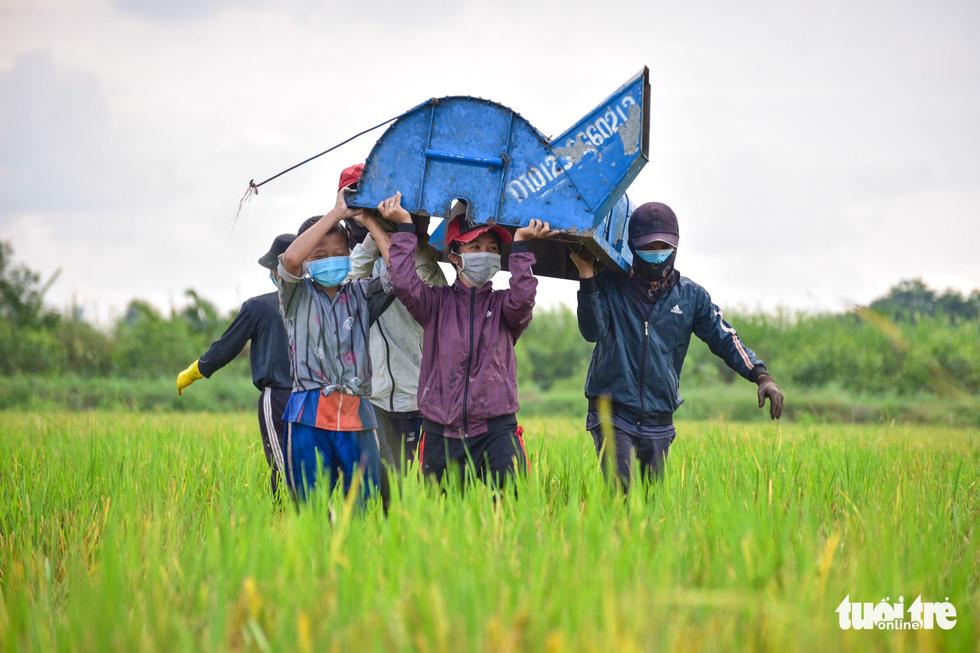 Gặt lúa, bắt cá mưu sinh giữa TP.HCM trong mùa dịch - Ảnh 5.