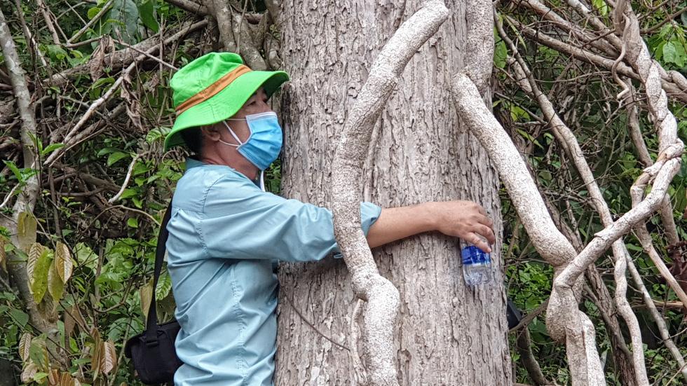 Rừng tự nhiên ở Phú Yên lại bị tàn phá: Lợi dụng dịch COVID-19 để phá rừng? - Ảnh 10.