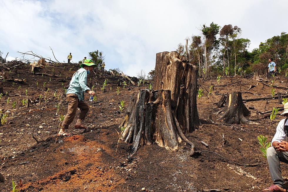 Rừng tự nhiên ở Phú Yên lại bị tàn phá: Lợi dụng dịch COVID-19 để phá rừng? - Ảnh 1.