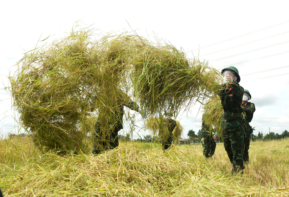 Bộ đội về thôn quê giúp nông dân vác lúa, bắt cá, giao sách giáo khoa cho học sinh - Ảnh 3.