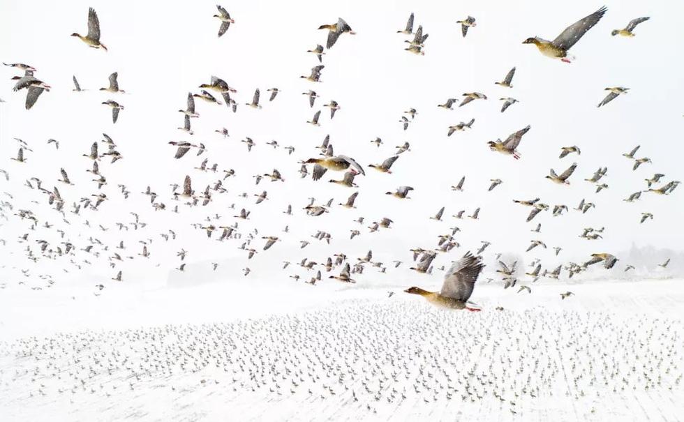 Ảnh chụp ở phá Tam Giang thắng giải cuộc thi chụp ảnh từ trên cao - Ảnh 2.