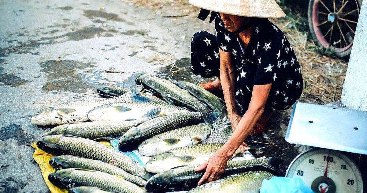 Hàng trăm lồng cá chết vì thủy điện không xả, nước sông Bồ không chảy