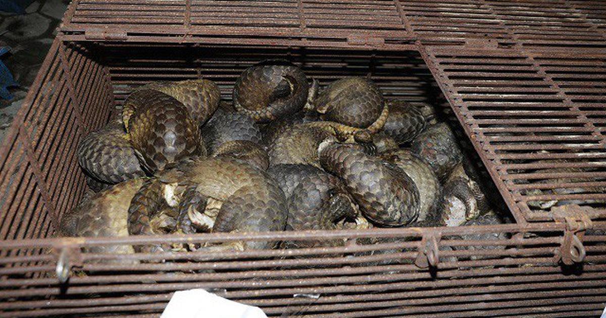 Bắt 9 người liên quan vụ buôn bán tê tê ở Hà Tĩnh