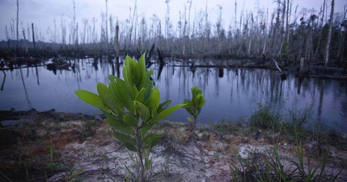 600 loài thực vật biến mất, đe dọa cả sự sinh tồn của con