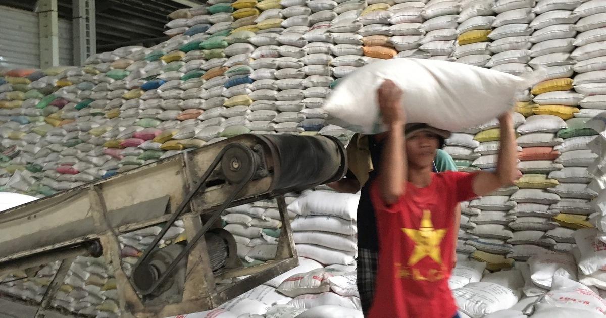 Xuất khẩu gạo giảm mạnh tạo áp lực lên tiêu thụ lúa hè thu