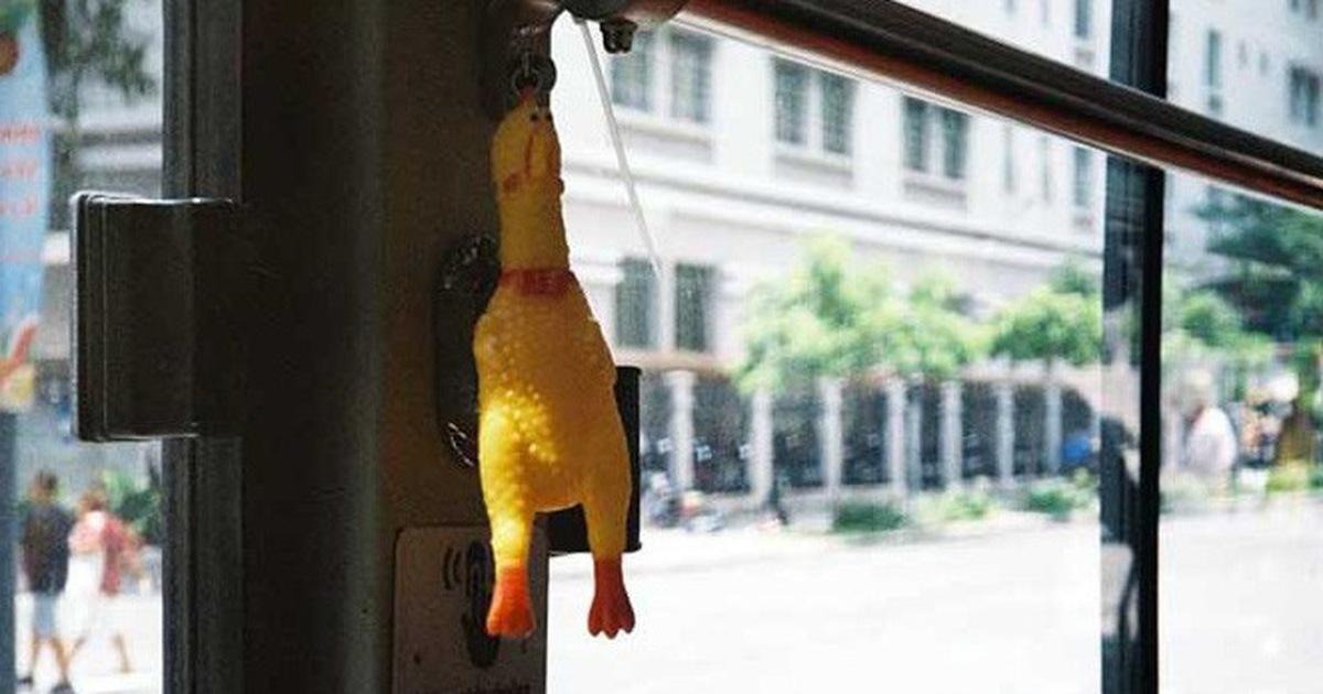 'Bóp bụng con gà đi em, nó là chuông xe buýt đó!'
