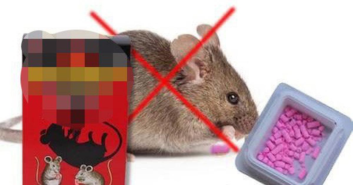 Ăn nhầm thuốc diệt chuột, em chết, anh nguy kịch