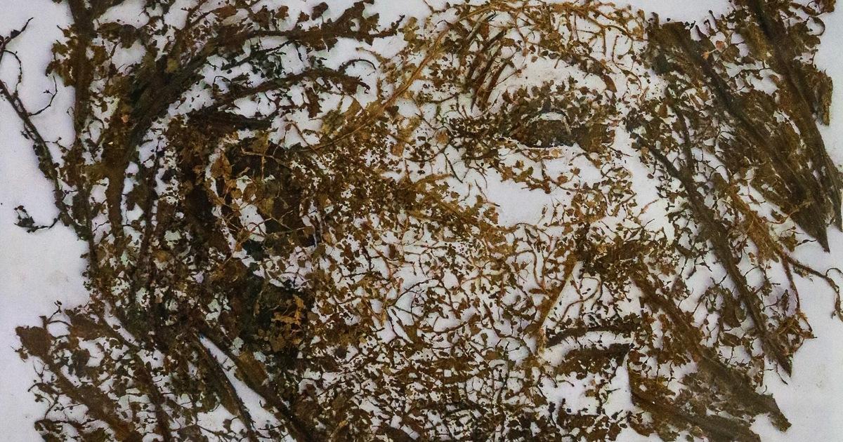 Những bức tranh được làm bằng lá sen mục và vỏ tràm