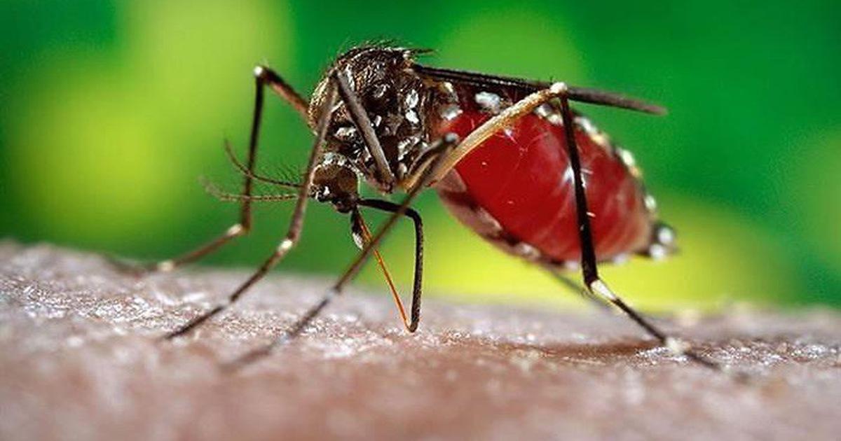 Bệnh mùa mưa nguy hiểm nhất do muỗi vằn gây ra