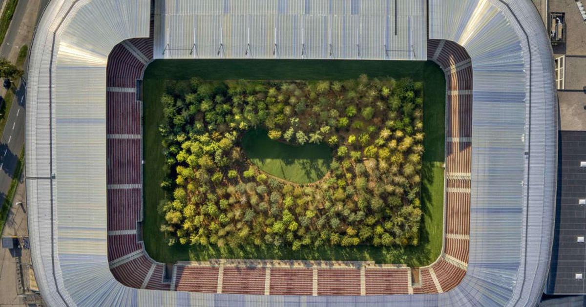 Áo biến sân bóng đá thành khu rừng 300 cây, có cây nặng 6 tấn