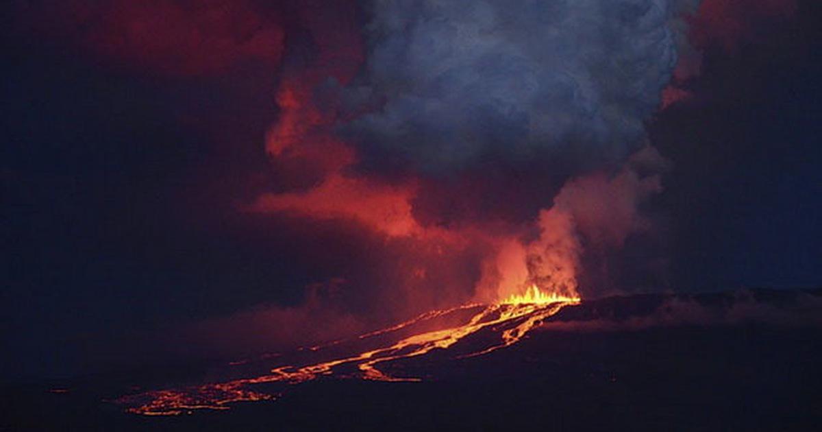 Núi lửa ởGalapagosphun, loài cự đà hồng bịđe dọa