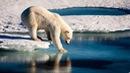 Lông gấu Bắc Cực màu gì?