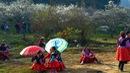 Tết Mông giữa mùa hoa mận