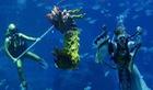 Múa rồng đón Tết với 'Nữ thần biển' ở Singapore