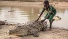 Nơi cá sấu được làm đám tang như con người