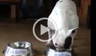 Video clip chú chó đoán VN thắng lan truyền mạnh ngày 23-1