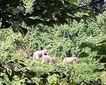 Lập khu bảo tồn chuyên về voi đầu tiên Việt Nam
