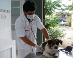 Đừng nhầm nhiễm sán chó với giun đũa chó