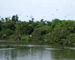 Bạc Liêu: Quy hoạch dài hạn bảo tồn đa dạng sinh học