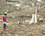 Đắk Nông: Hàng trăm cán bộ cấp đất rừng sai quy định