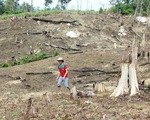 Chiếm dụng đất rừng trái phép, nhiều cán bộ Đắk Nông bị kỷ luật