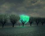 Cây phát sáng trong đêm như đèn