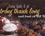 Trung Quốc ồ ạt trồng thanh long cạnh tranh với Việt Nam