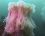 Sinh vật nào lớn nhất đại dương?