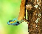 Phát hiện 86 loài quý hiếm ở Vườn quốc gia Bù Gia Mập