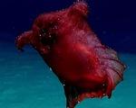 """Video """"quái vật gà không đầu"""" dưới đại dương"""