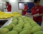 Cả ngành rau quả VN xuất khẩu thua trái kiwi của New Zealand