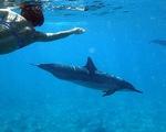 Cá heo không thể giao tiếp với nhau vì con người quá ồn