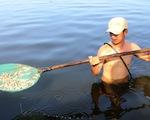 Hơn 100.000 con tôm trong hồ chết trắng, nghi bị đầu độc