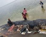 Cá nhà táng chết dạt vào bờ với 5,9kg rác nhựa trong bụng