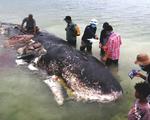 Cá nhà táng chết dạt vào bờ với 5,9 kg rác nhựa trong bụng