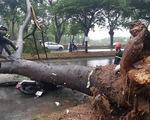 Bão suy yếu thành áp thấp, TP.HCM mưa gió giật đổ cây