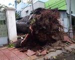 Nhiều cây cổ thụ bật gốc, ngã đổ tại Vũng Tàu