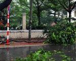 Vũng Tàu bắt đầu mưa to, cây gãy đổ