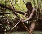 Tới Tây Papua xem bộ lạc Kombai làm nhà cao chót vót