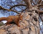 Vẻ đẹp của động vật hoang dã