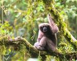 Phát hiện 157 loài động thực vật mới ở Đông Nam Á