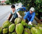 Nông sản Việt Nam sang Trung Quốc gặp khó