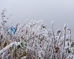 Miền Bắc đón Tết Dương lịch trong rét đậm, rét hại