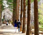 Những địa điểm check-in hot ở Nhật Bản và Hàn Quốc