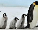 Những ông bố đơn thân đáng nể trong thế giới động vật