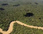Rừng Amazon sắp mất nửa số loài vì biến đổi khí hậu?