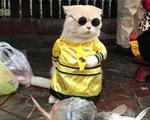Chú mèo bán cá tên Chó ở Hải Phòng gây chú ý trên mạng xã hội